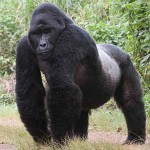 Look! An 800 lb. gorilla!  Am I the only one seeing this?